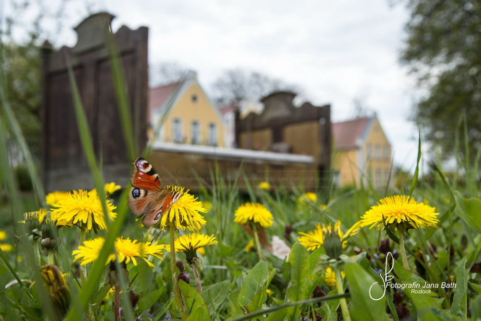 Zwischen Butterblumen und Schmetterlingen - Das Wildkräuterhotel Ehmkendorf