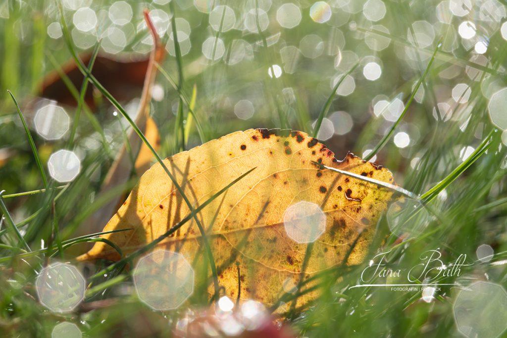 Herbstblatt liegt im Glitzermeer, Lensflares - Foto Jana Bath 2019