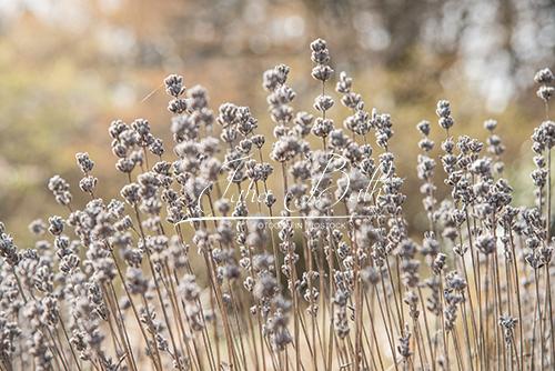 braunes Gras, Textur, Jana Bath