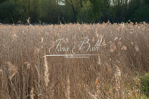 Texturendatenbank, braune Gräser, Jana Bath