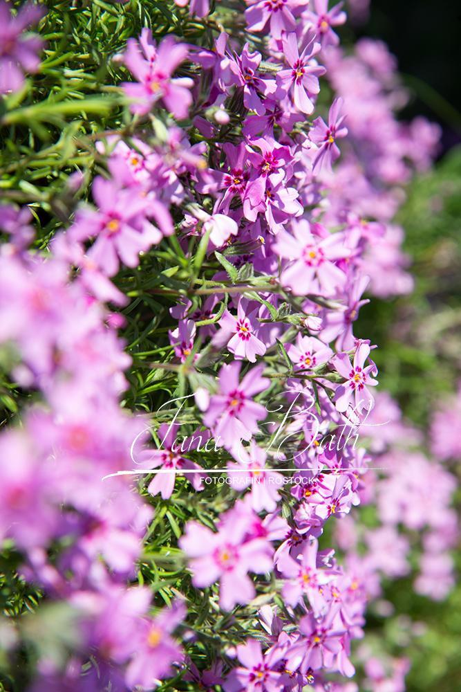 Texturenworkshop: verwendete Blumentextur